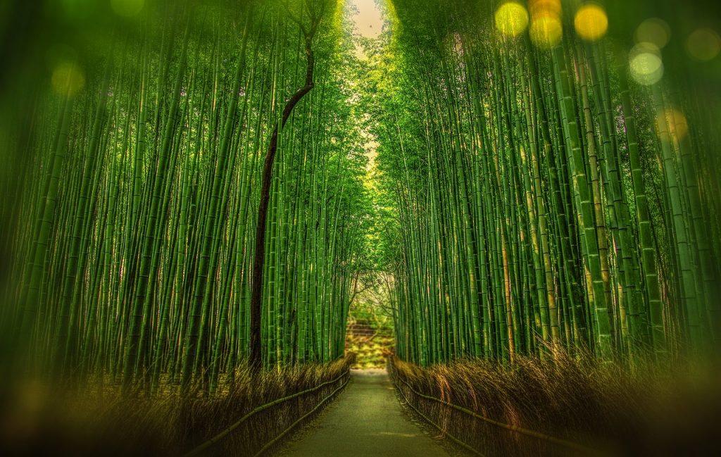 La forêt de bambous de Sagano au Japon