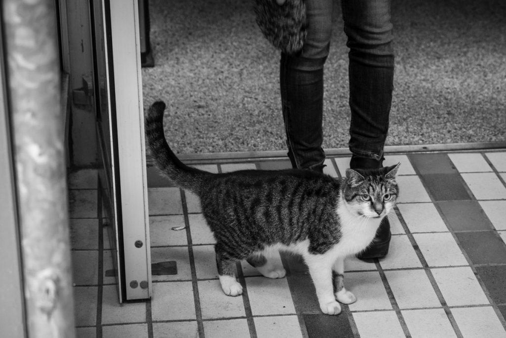 Ne laissez pas votre chat lorsque vous partez en vacances