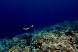 Plongée en apnée aux Philippines